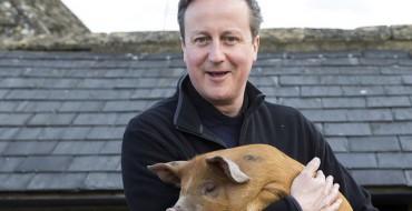 Satire and Piggate